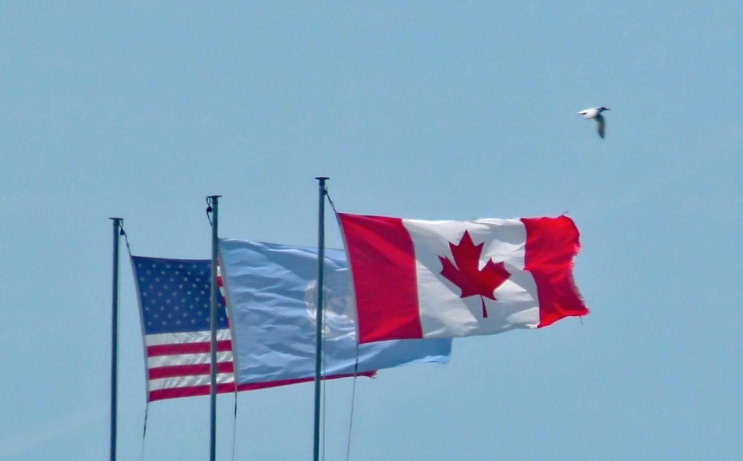 Moving to Canada as an American